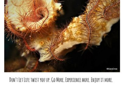dont-let-life-twist-you-up-go-more-experience-more-enjoy-it-more-1