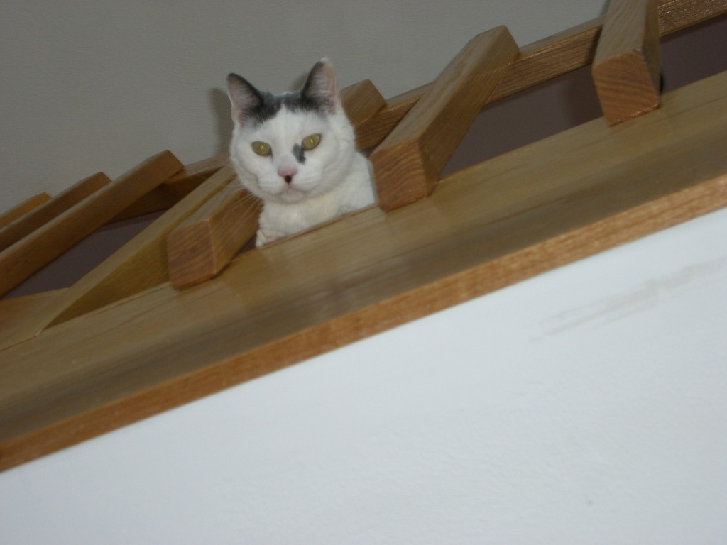 Seriously mom?  do you think I am not keeping an eye on you and dad... I see everything and well....