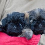 Tamarin's Puppies