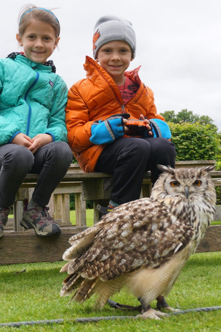 Dunrobin Castle with the Indian Bengal owl.
