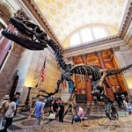 7 Museum To Visit In New York