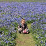 Gracie in the bluebells