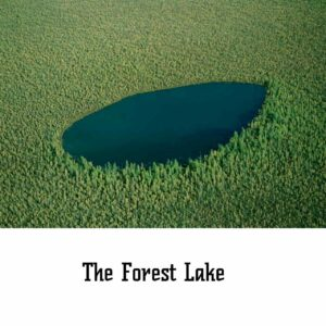 the forest lake