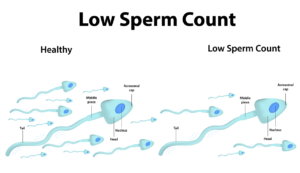 Herbs To Increase Low Sperm Count