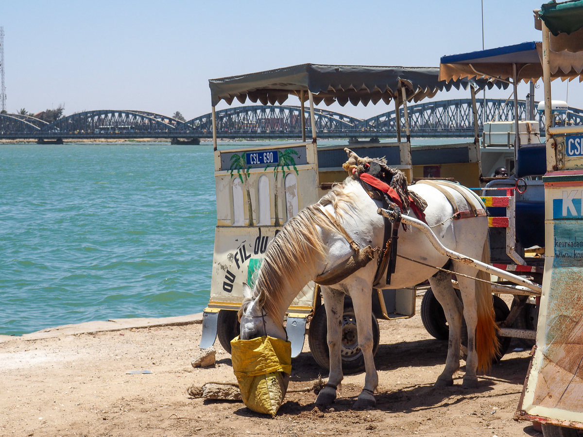 Senegal horse carriage