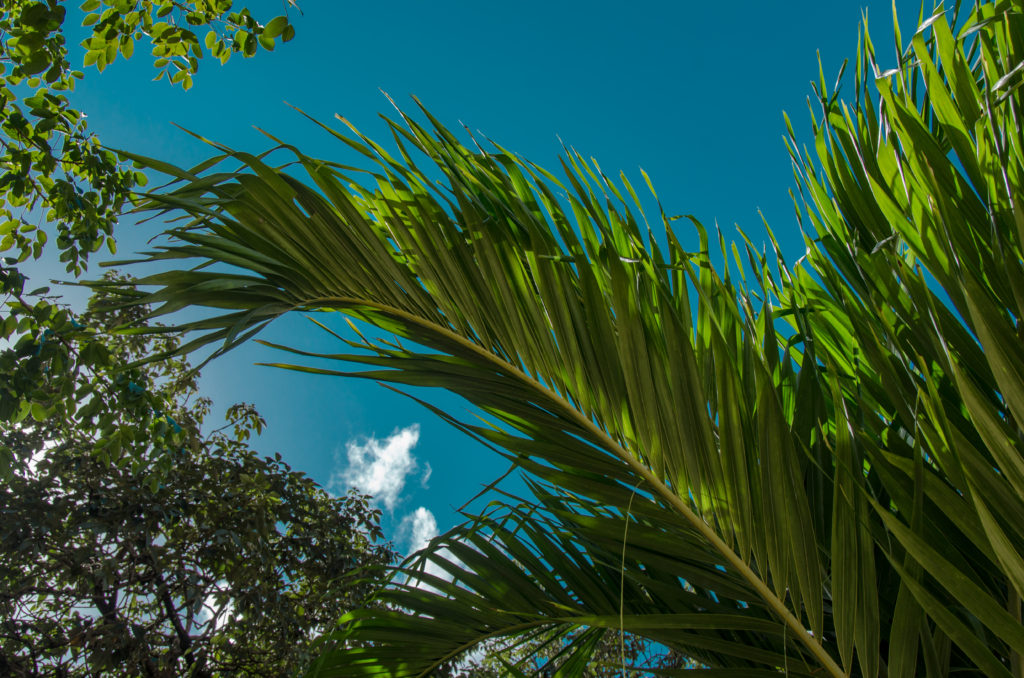 Palm leaves and blue sky