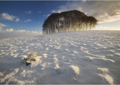 The copse on the hill in winter (Cookworthy Knapp)