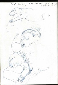 Rome_puppy_on_a_train014