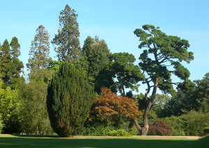 View_of_trees