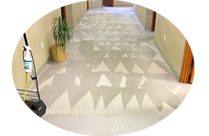 carpet cleaning wny