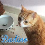 Budino <3