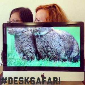 DeskSafari1