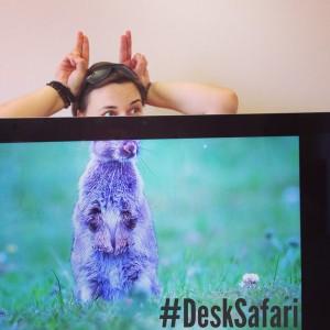DeskSafari2