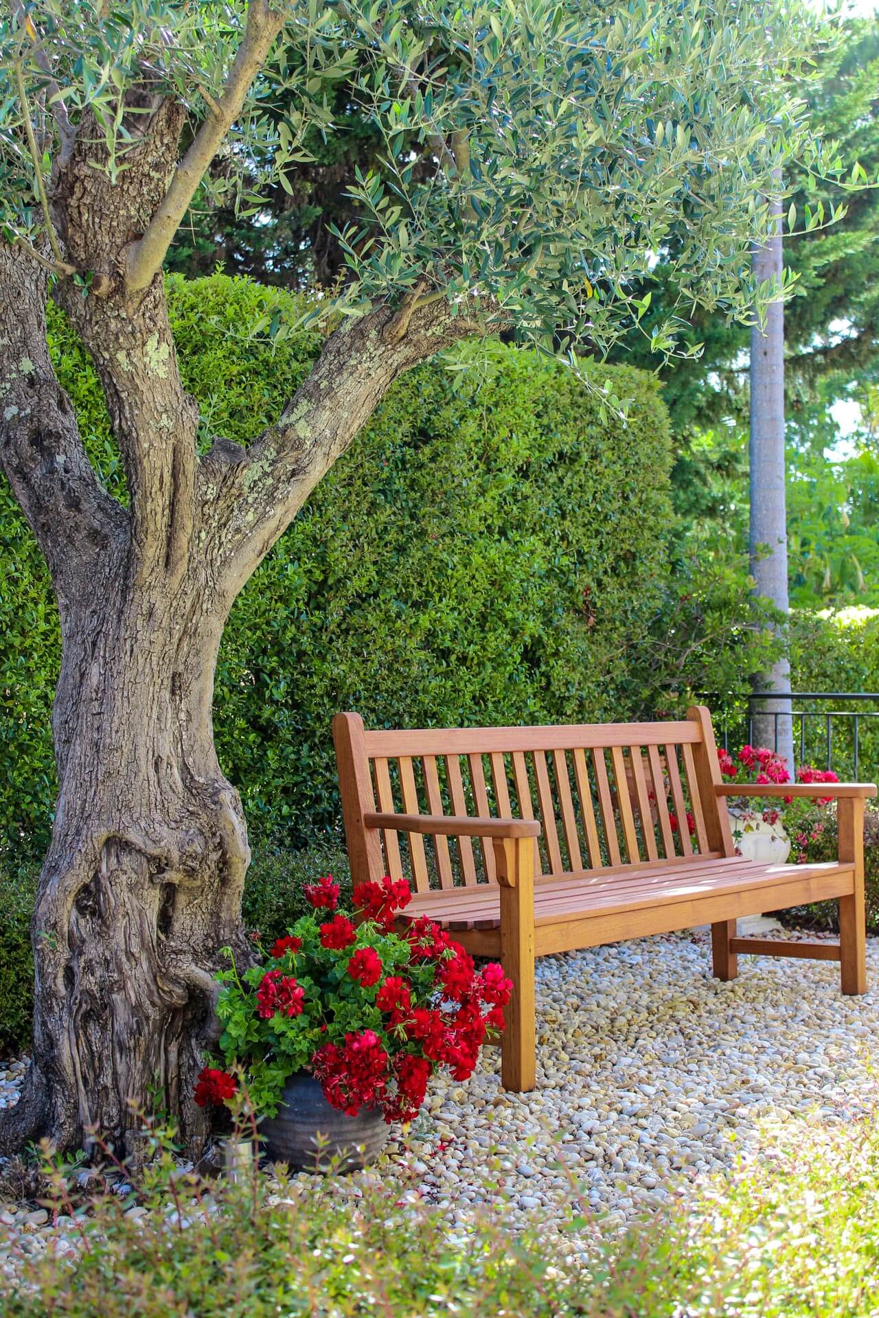 Meditteranean style garden bench under olive tree