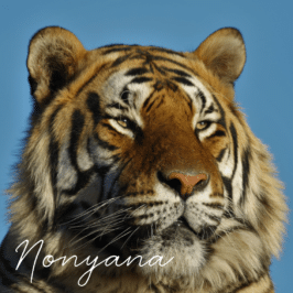 Tiger Nonyana at Tiger Canyon Private Game Reserve