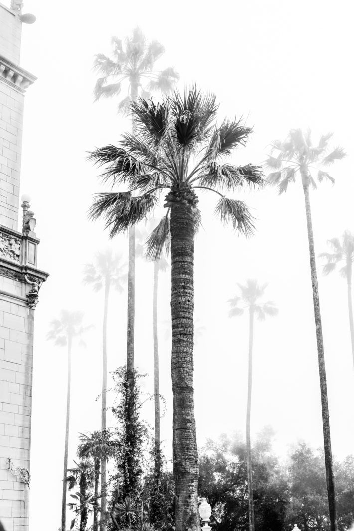 foggy palm trees at hearst castle in cambria california