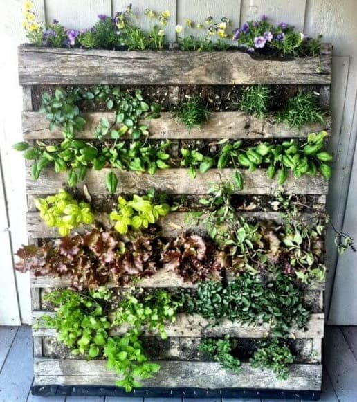 Decoration with Pallets