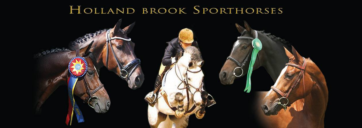 Holland Brook Sporthorses