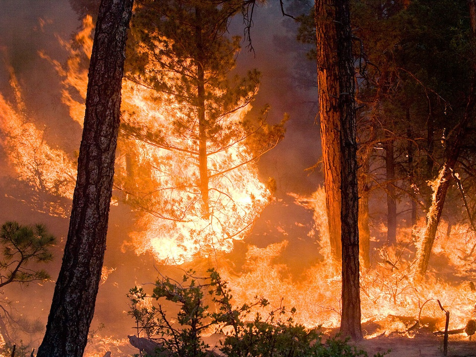 Incendio forestal Kari Greer:USFS Gila National Forest