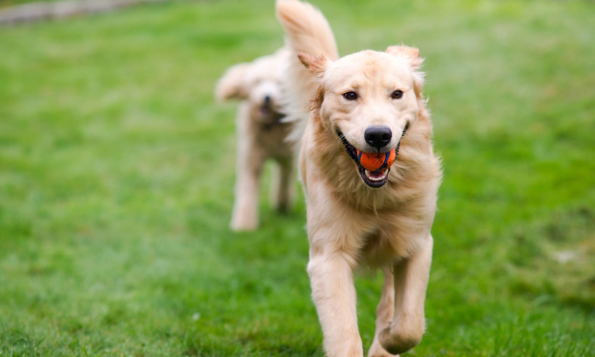 Now Open! Dog Boarding, Adoption and Rehoming Cottages