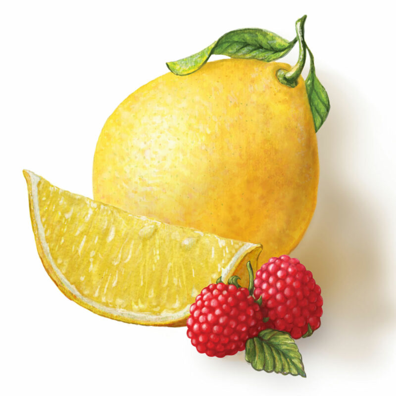 lemon and raspberry illustration