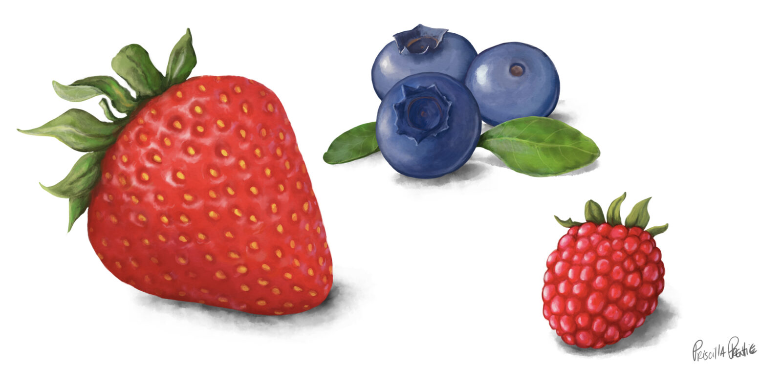 Strawberry, blue berry, and raspberry fruit illustrations