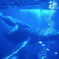 whalebubbles