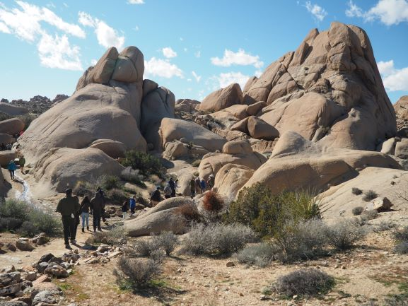 Joshua-Tree-National-Park-Ranger-Tour