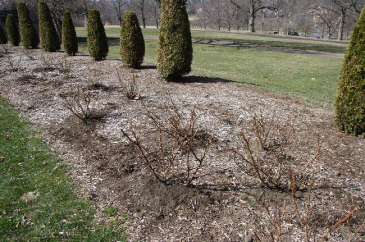Planting Day 2011 – 25