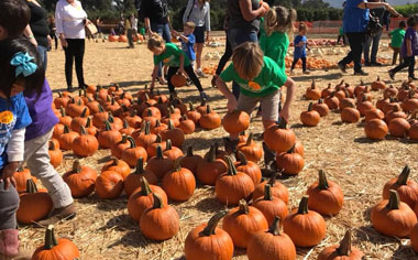 Pumpkin Patch Limoneira Ranch