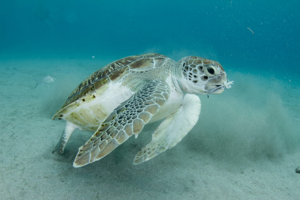 turtle curacao