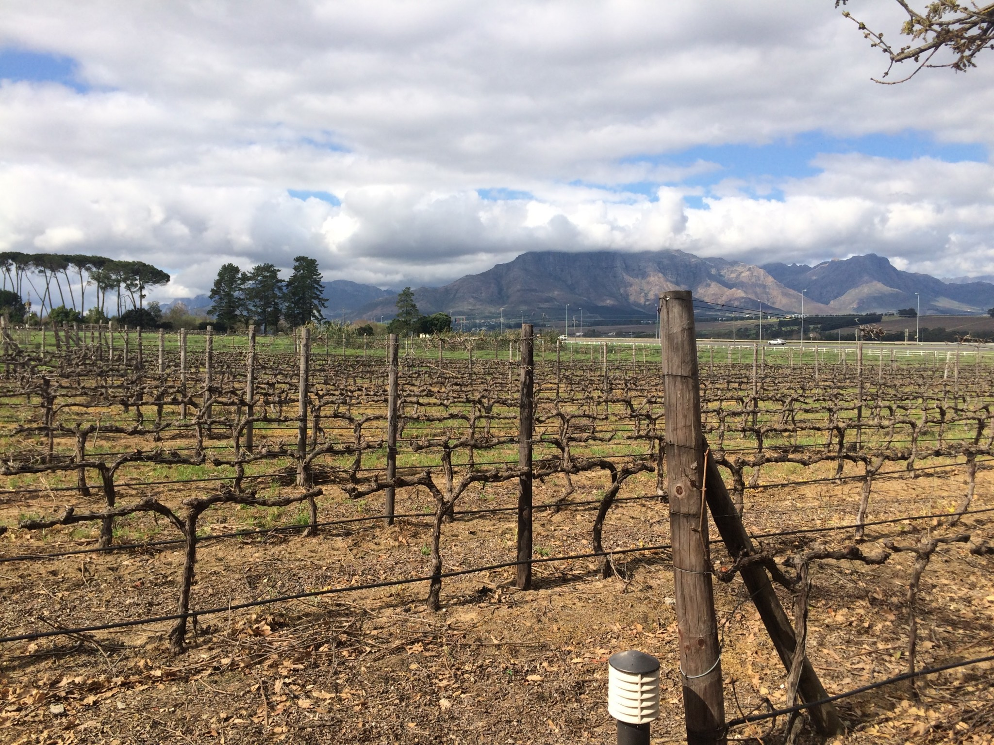 South African Vineyards