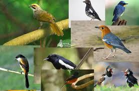 Macam-Macam Parasit Yang Menyerang Burung Kicauan