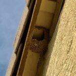 Bird Nest at the eaves
