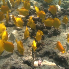 News – Hawaii Fish Collector in Court