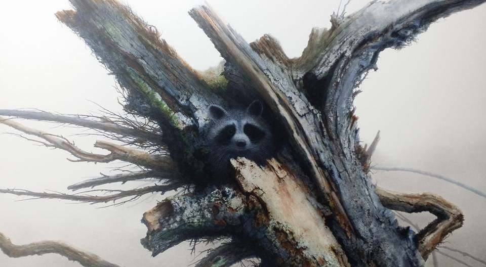 Raccoon in hollow tree