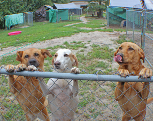 Dog shelter 1