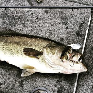 Example of quality Whopper Plopper Fish from Practice