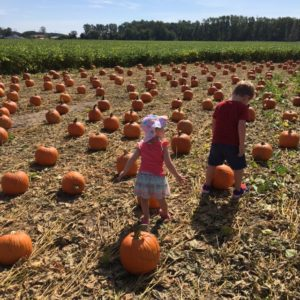 It is pumpkin patch time! That also means it is time for pumpkin foods of all kinds! This includes creamy soup!
