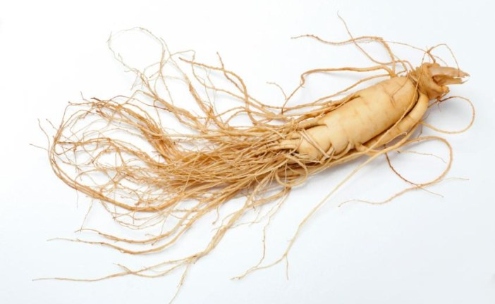 U.S. Forest Service Announces Ginseng Permit Lottery for 2018