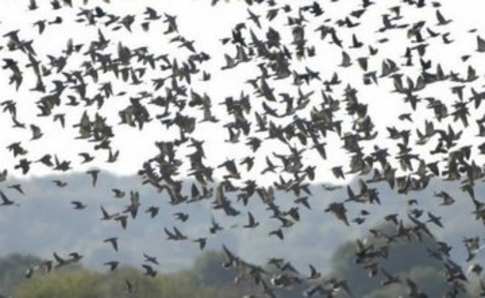 Make Safety and Responsibility a Priority as Dove Season Opens on Sept. 3