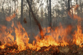 URGENT MEETING ON THE FOREST FIRES SUNDAY NOVEMBER 13