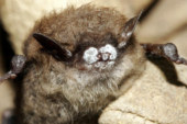 Park limits access in Whiteoak Sink area due to declining bat population