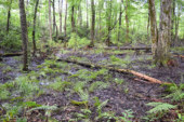 Tick Tock: Fund to Conserve NC Land Approaches Expiration