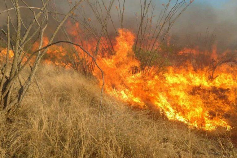 The N.C. Forest Service Is Asking Residents To Halt Debris Burning