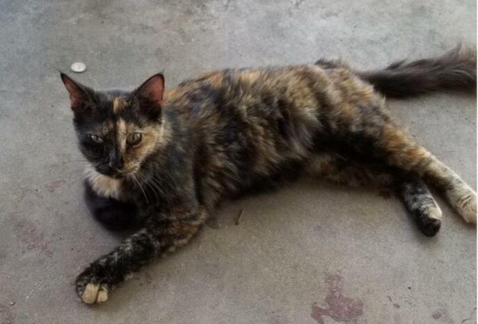 Found Cat   Unknown