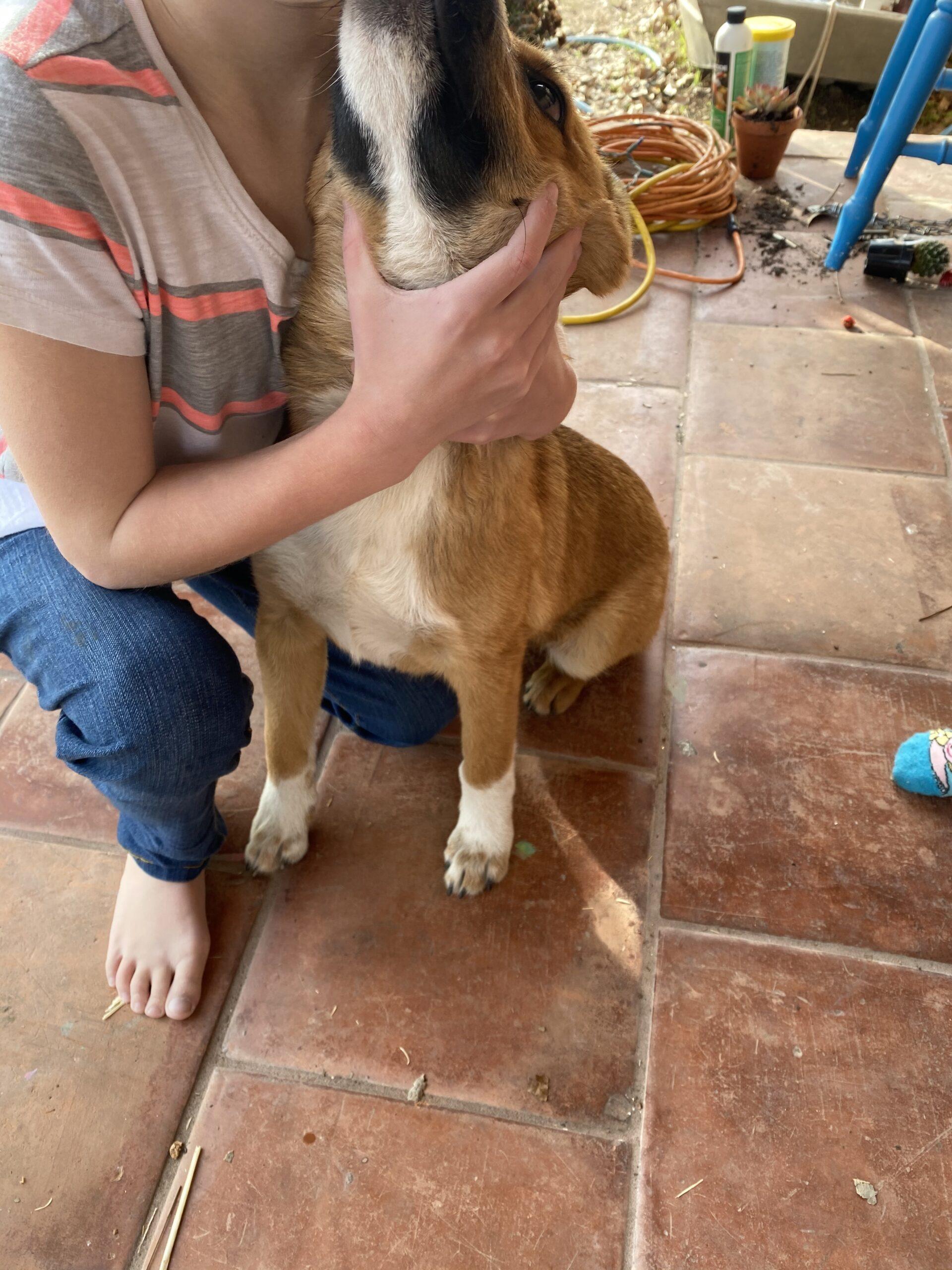Found Dog   Male   Unknown