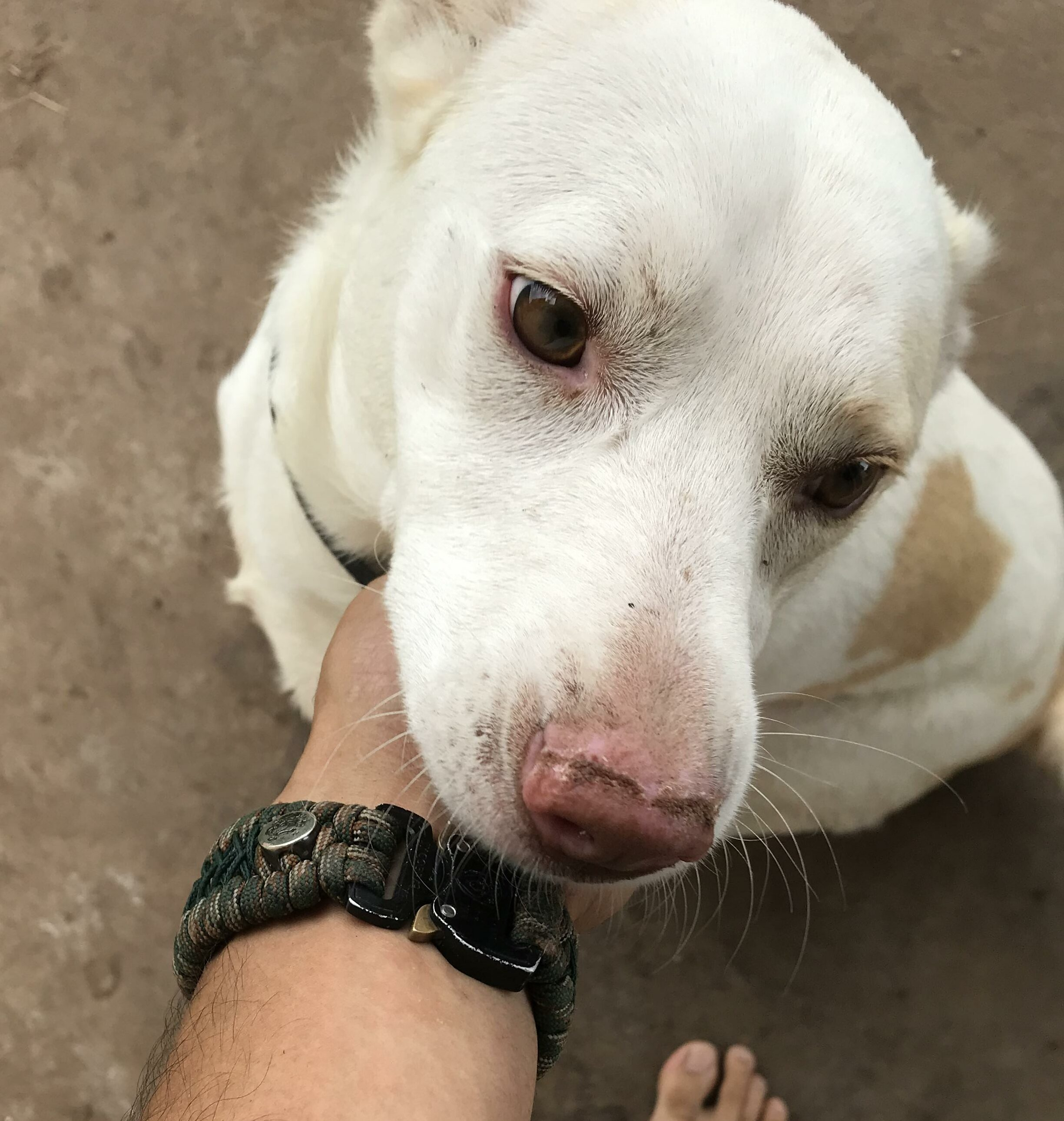 Found Dog   Female