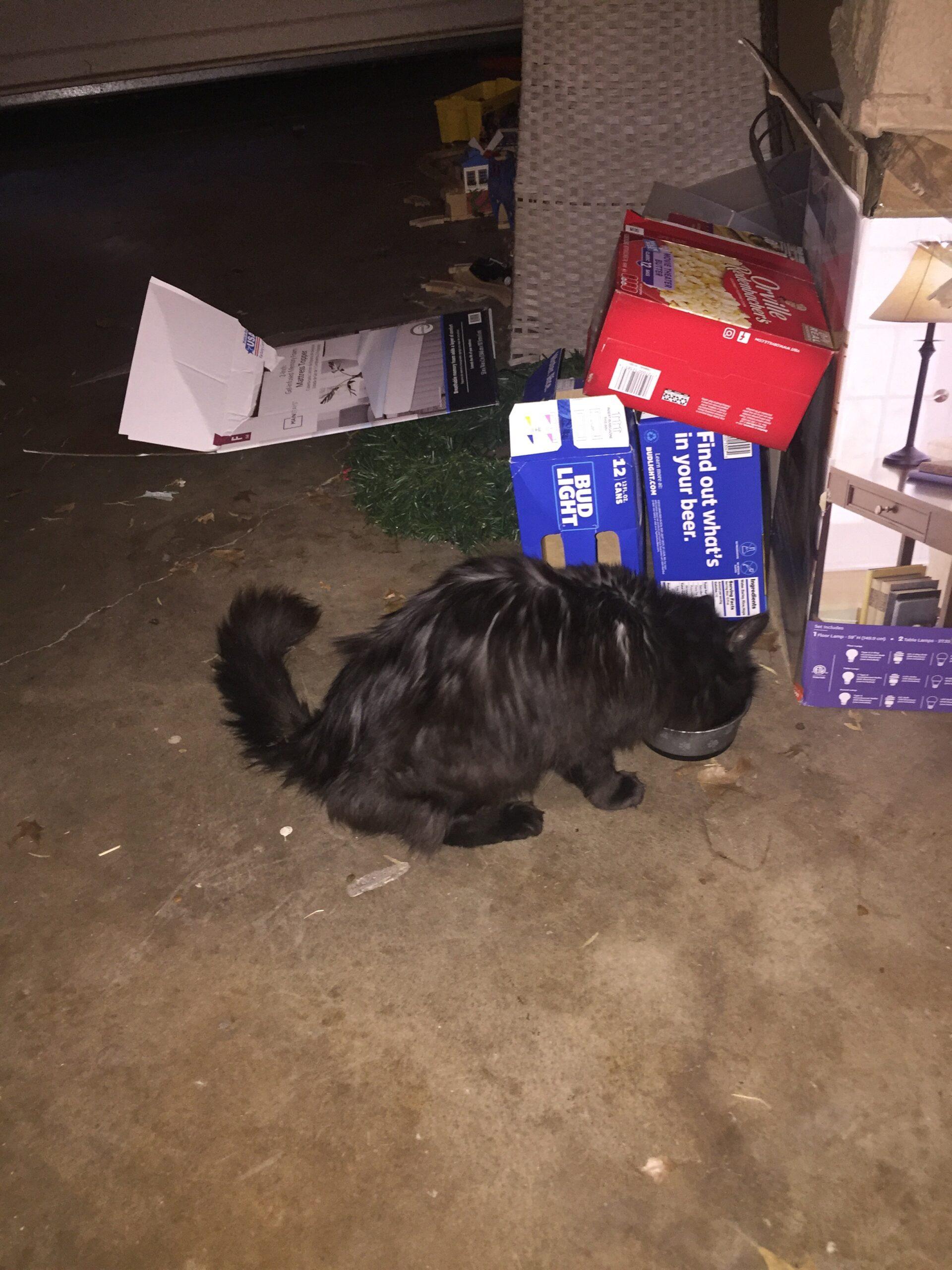 Found Dog   Male   Dachshund