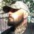 Profile picture of Travis Sharpe
